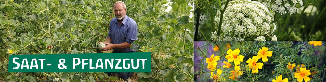 Ökologische Saatgutvermehrung